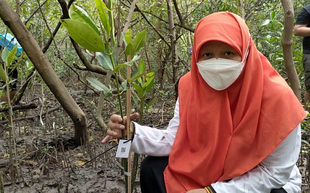 Giat Tanam 500 Bibit Pohon Mangrove, Reni Astuti Dorong Pemkot Makin Perhatikan Wilayah Pesisir Surabaya